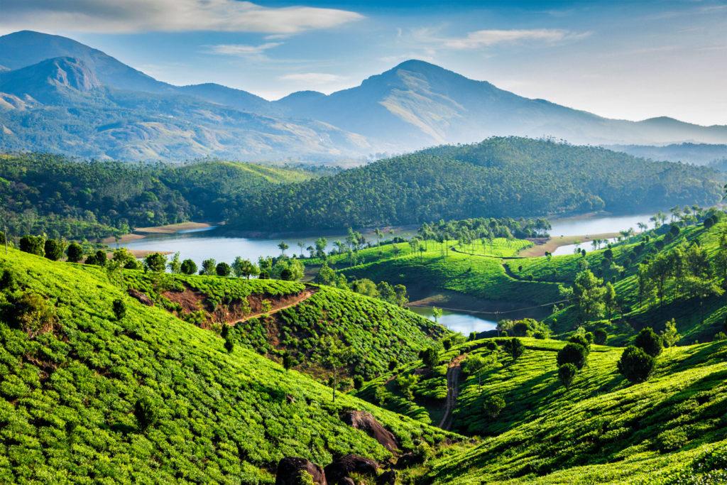 Tea plantations in the interior of India